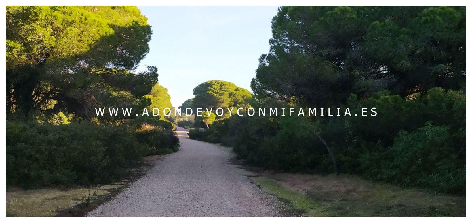 sendero-pinar-de-la-algaida-Adondevoyconmifamilia-07