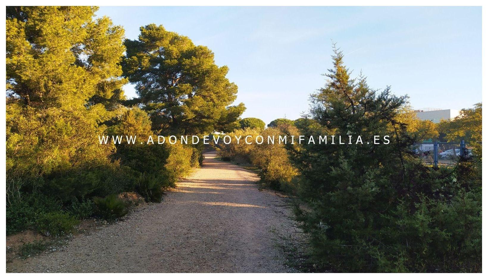 sendero-pinar-de-la-algaida-Adondevoyconmifamilia-08