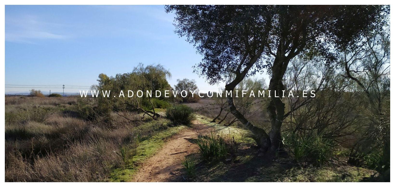 sendero-pinar-de-la-algaida-Adondevoyconmifamilia-19