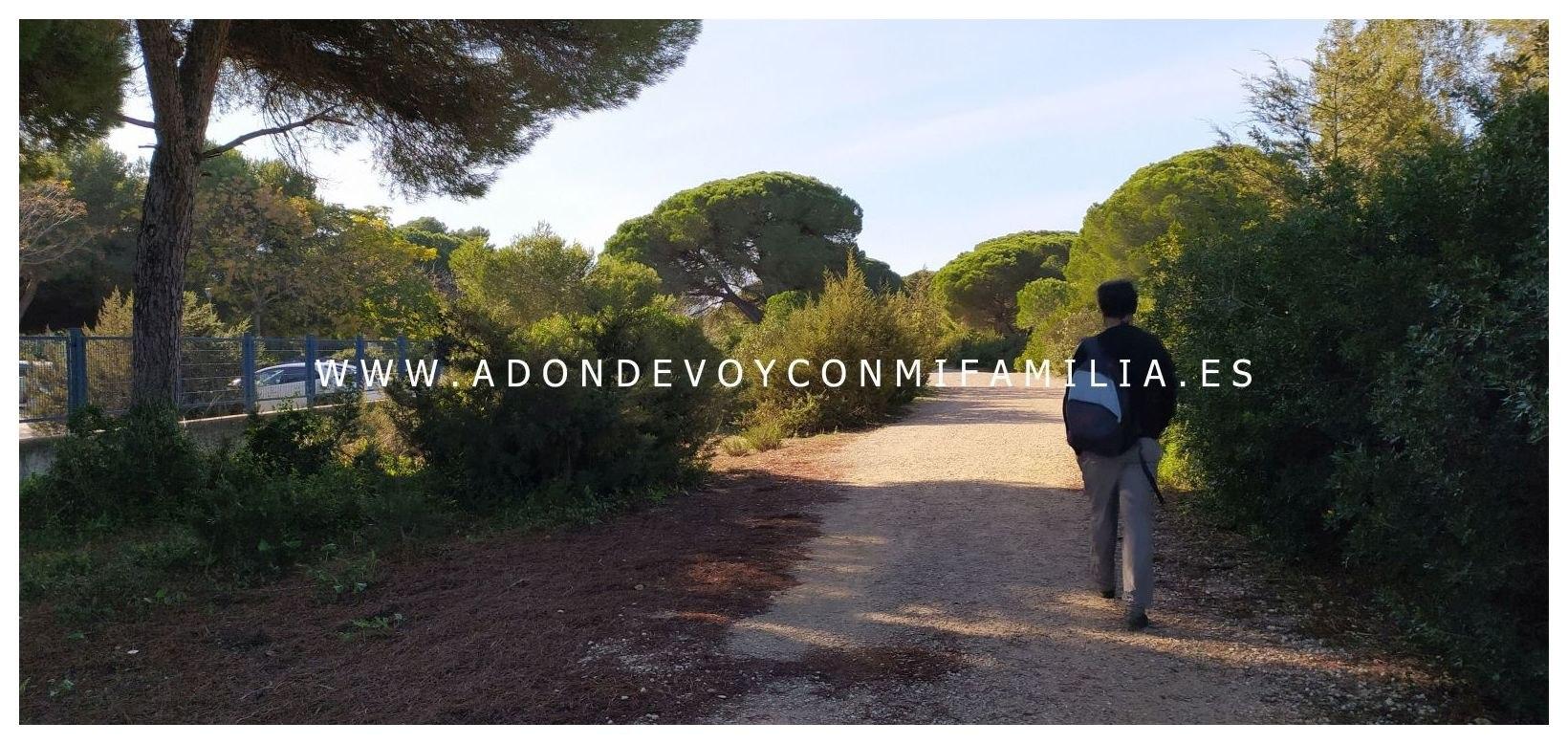 sendero-pinar-de-la-algaida-Adondevoyconmifamilia-25