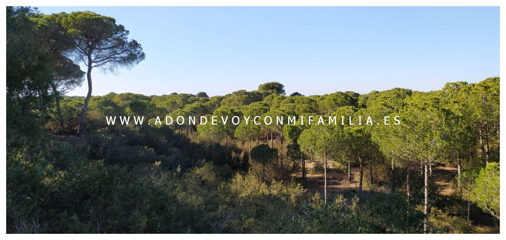 sendero-cerro-del-aguila-pinar-de-la-algaida-sanlucar-adondevoyconmifamilia-02