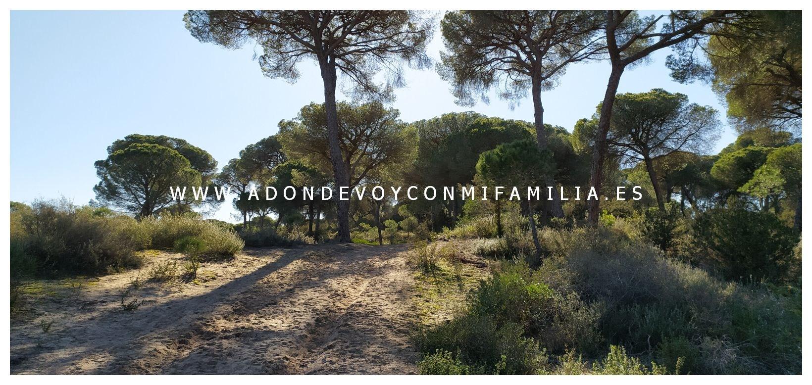 sendero-cerro-del-aguila-pinar-de-la-algaida-sanlucar-adondevoyconmifamilia-04