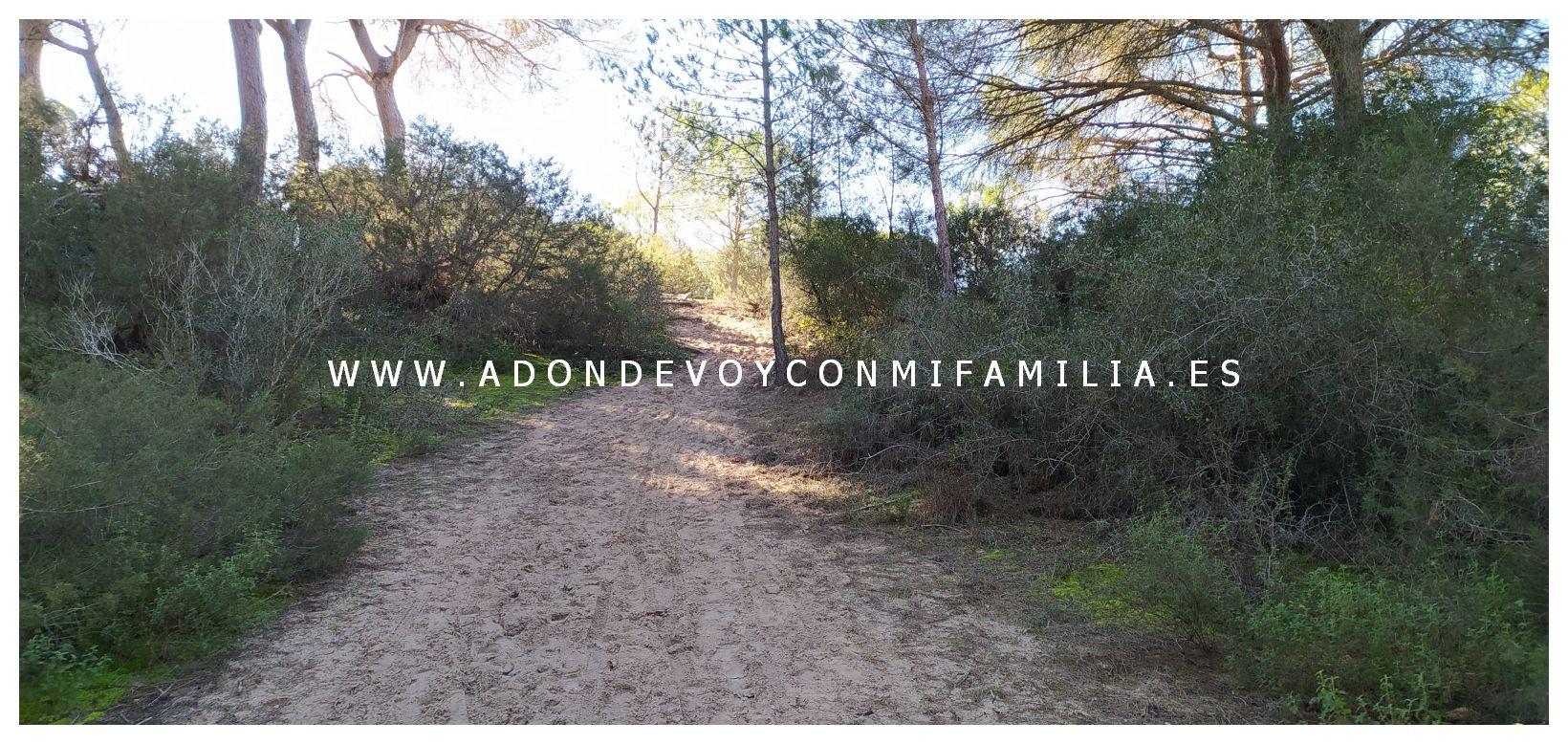 sendero-cerro-del-aguila-pinar-de-la-algaida-sanlucar-adondevoyconmifamilia-07
