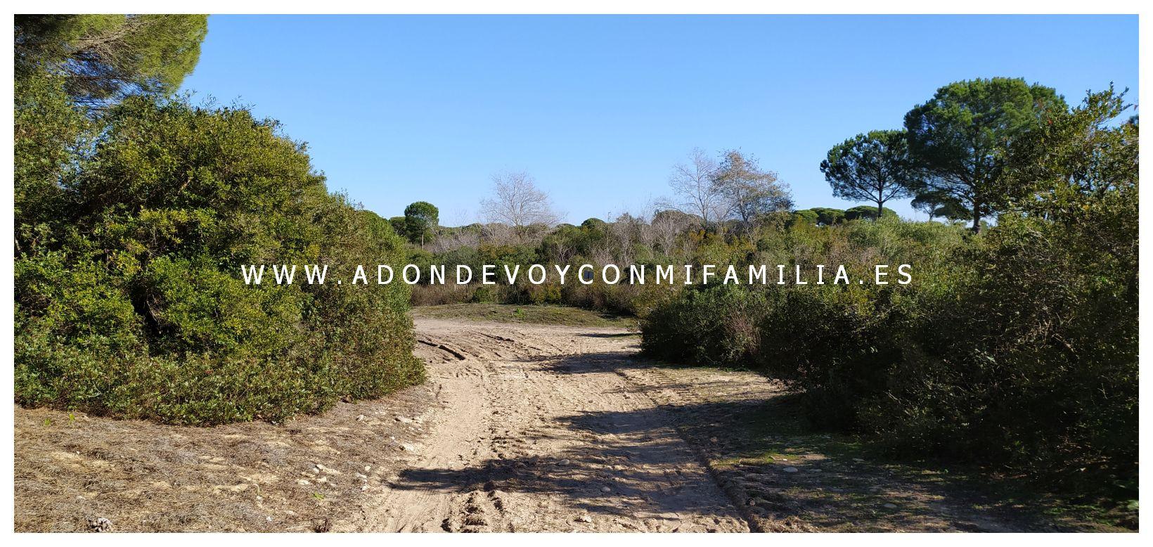 sendero-cerro-del-aguila-pinar-de-la-algaida-sanlucar-adondevoyconmifamilia-08