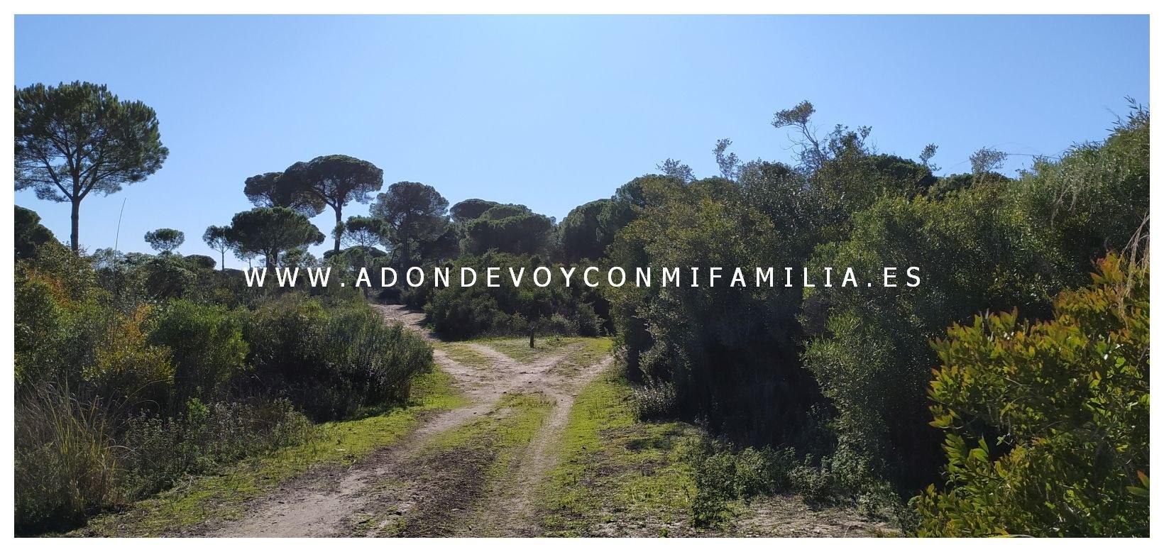 sendero-cerro-del-aguila-pinar-de-la-algaida-sanlucar-adondevoyconmifamilia-09