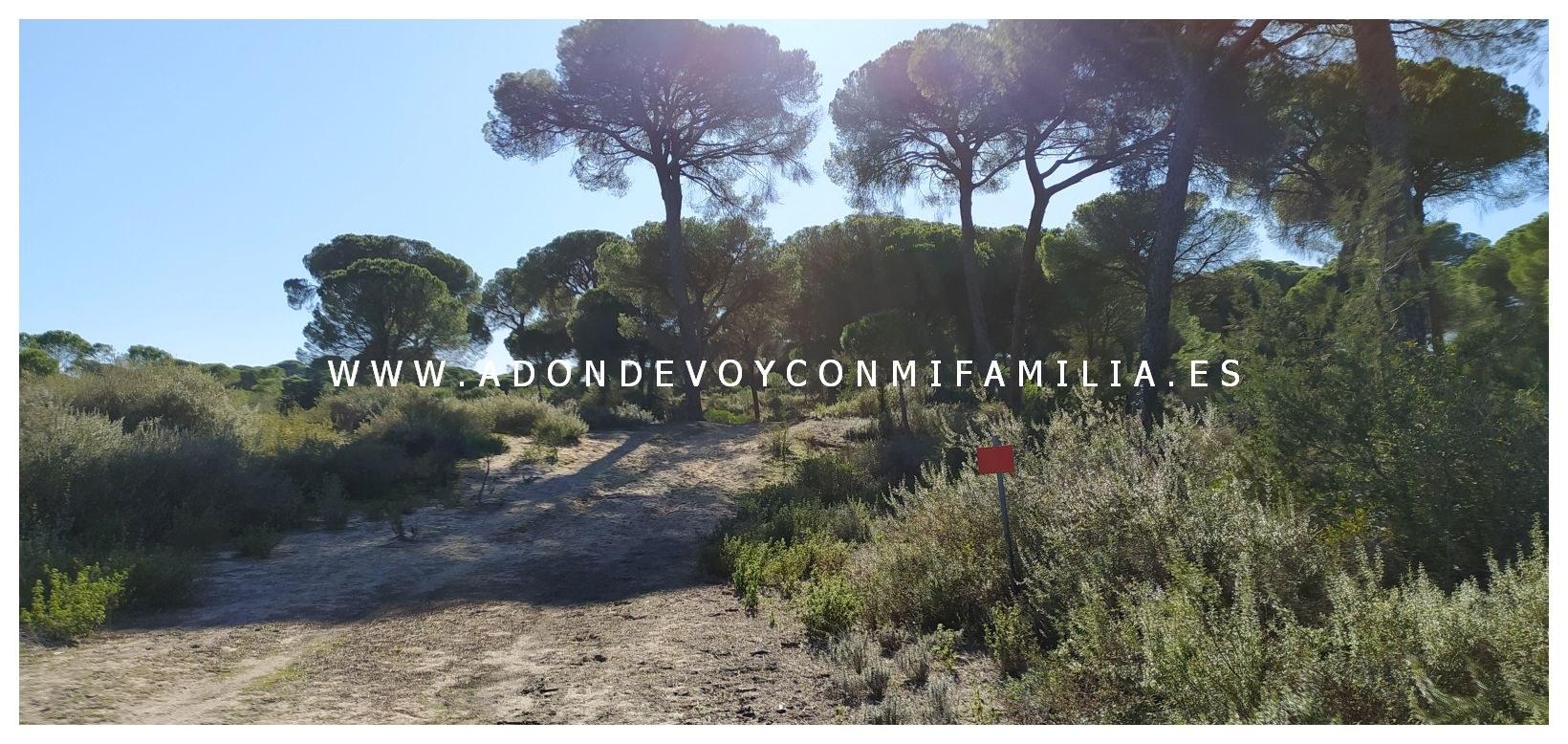 sendero-cerro-del-aguila-pinar-de-la-algaida-sanlucar-adondevoyconmifamilia-10