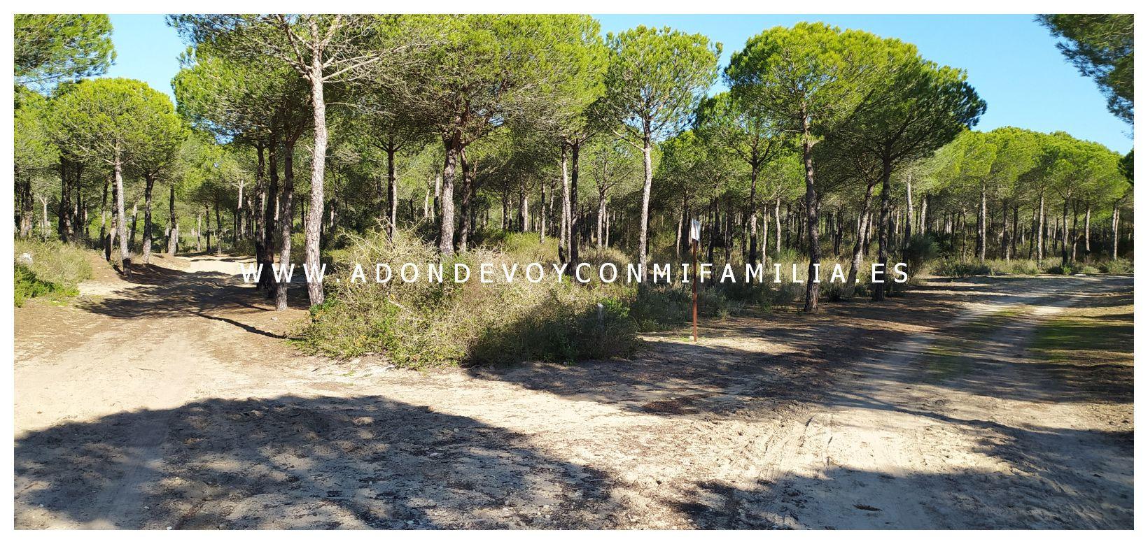 sendero-cerro-del-aguila-pinar-de-la-algaida-sanlucar-adondevoyconmifamilia-11