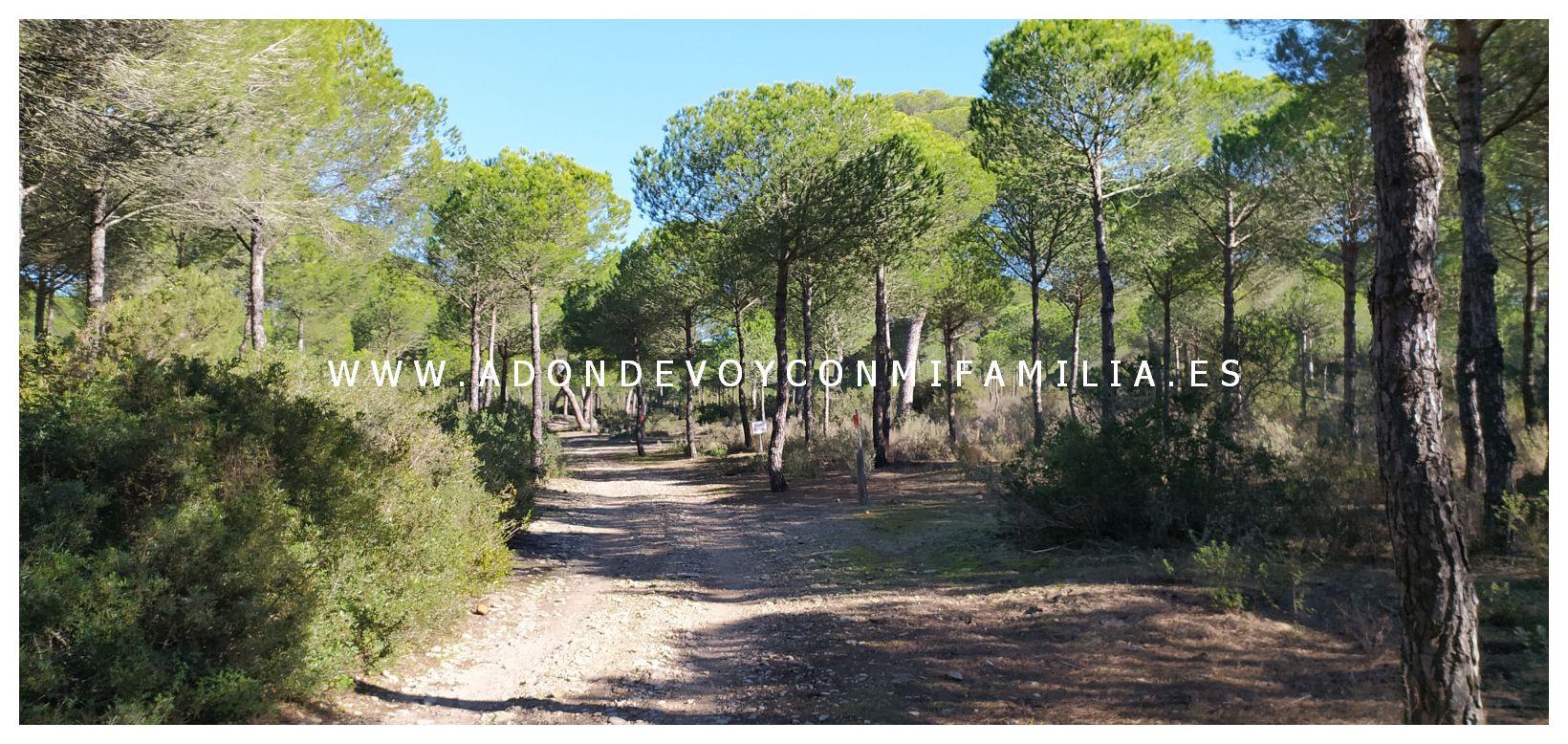 sendero-cerro-del-aguila-pinar-de-la-algaida-sanlucar-adondevoyconmifamilia-12