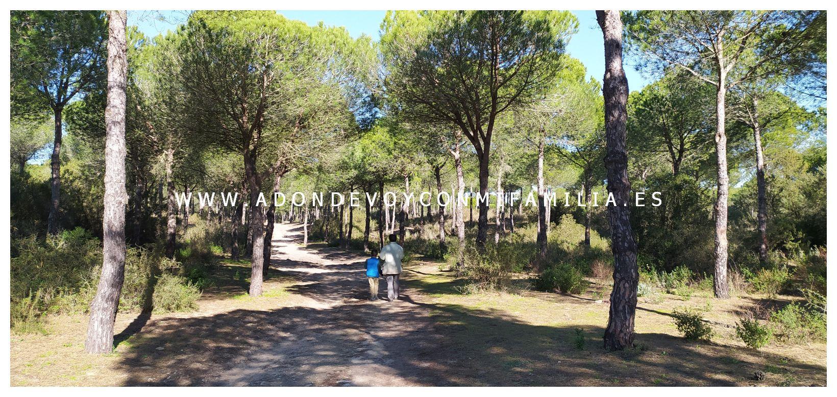 sendero-cerro-del-aguila-pinar-de-la-algaida-sanlucar-adondevoyconmifamilia-14