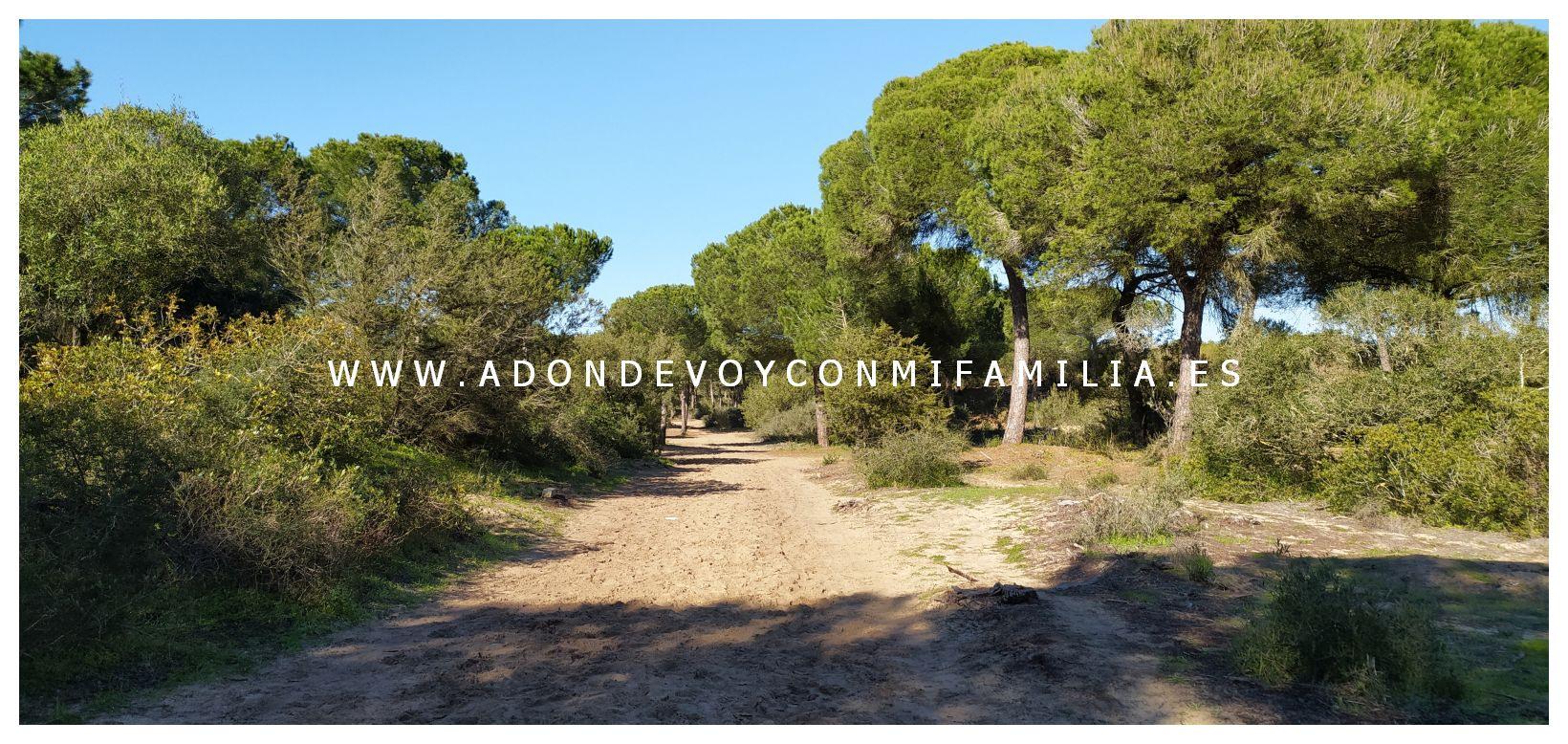 sendero-cerro-del-aguila-pinar-de-la-algaida-sanlucar-adondevoyconmifamilia-19