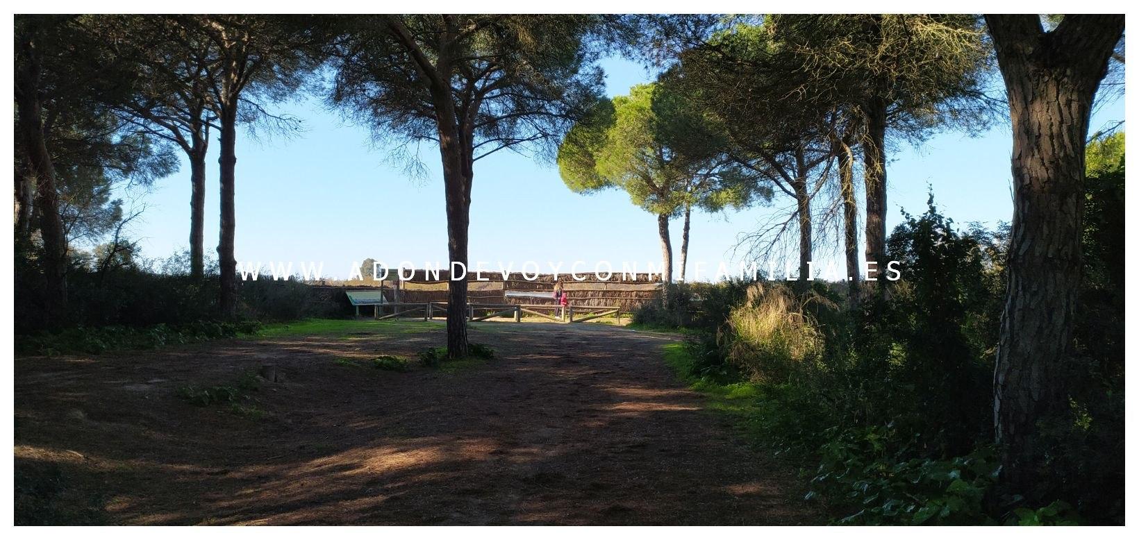 sendero-cerro-del-aguila-pinar-de-la-algaida-sanlucar-adondevoyconmifamilia-22