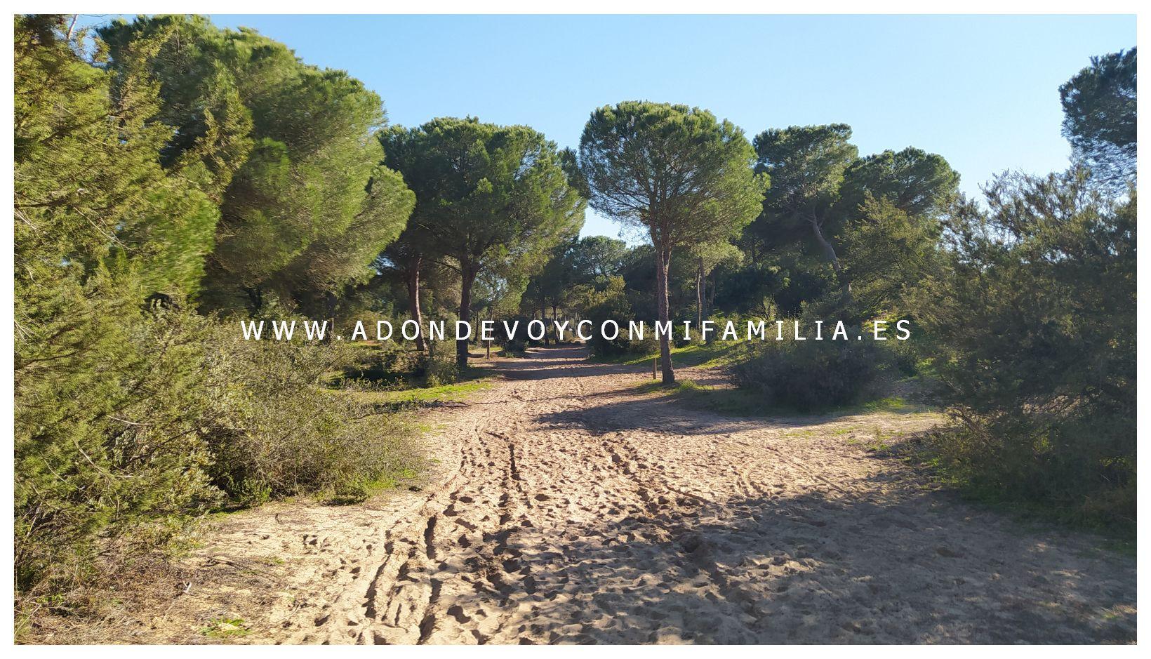 sendero-cerro-del-aguila-pinar-de-la-algaida-sanlucar-adondevoyconmifamilia-31