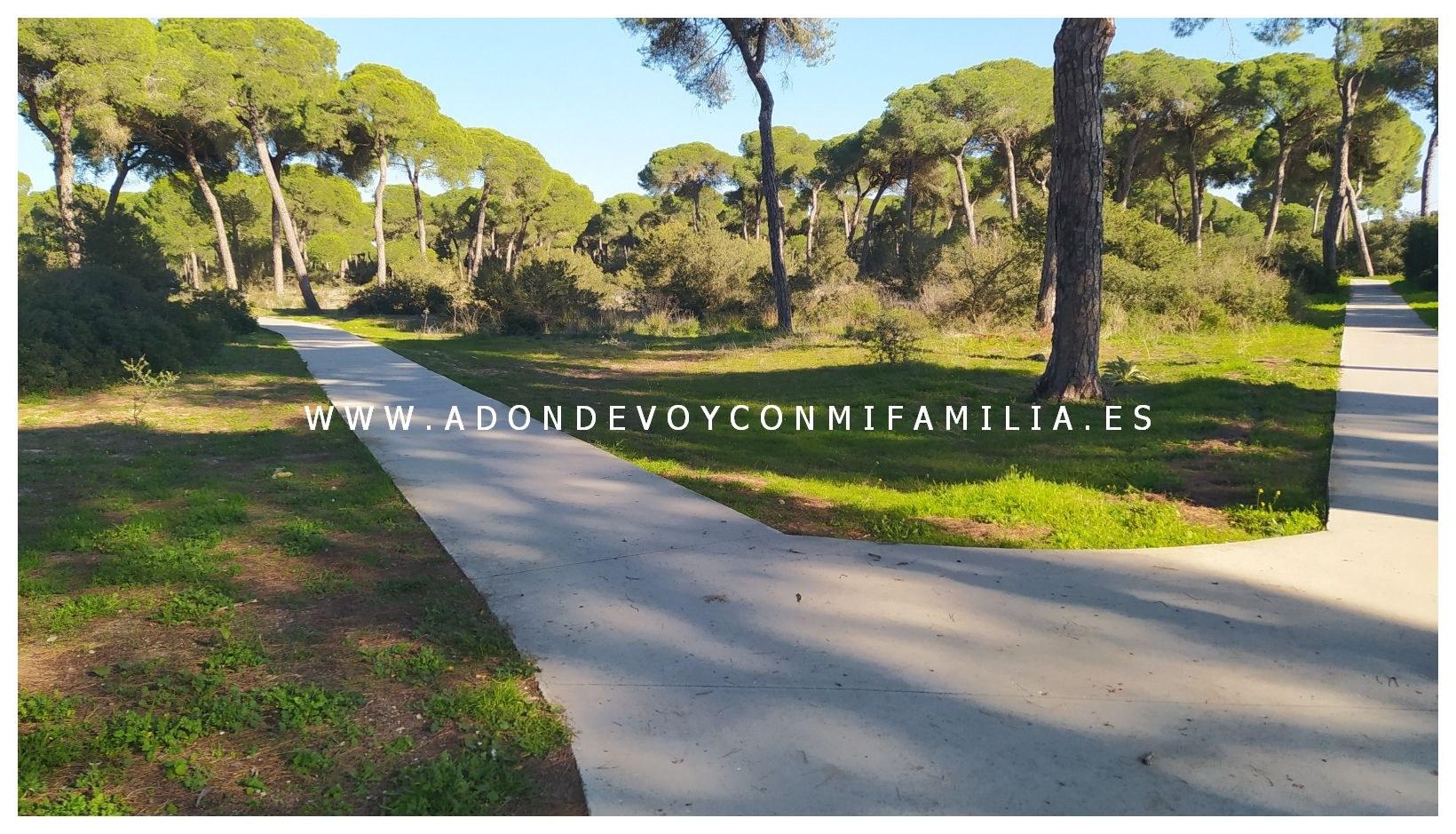 sendero-cerro-del-aguila-pinar-de-la-algaida-sanlucar-adondevoyconmifamilia-34