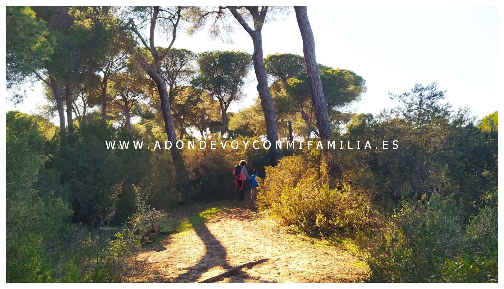 sendero-cerro-del-aguila-pinar-de-la-algaida-sanlucar-adondevoyconmifamilia-38