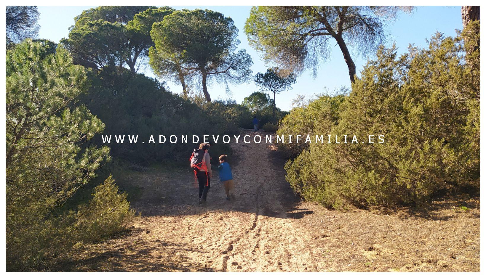 sendero-cerro-del-aguila-pinar-de-la-algaida-sanlucar-adondevoyconmifamilia-43