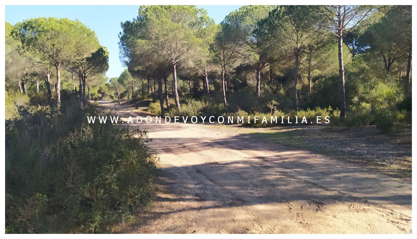 sendero-cerro-del-aguila-pinar-de-la-algaida-sanlucar-adondevoyconmifamilia-47