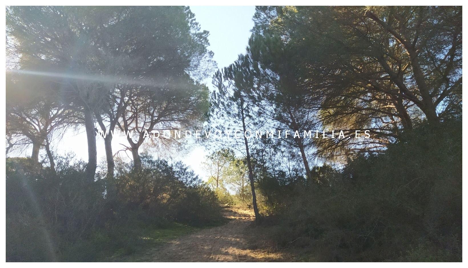 sendero-cerro-del-aguila-pinar-de-la-algaida-sanlucar-adondevoyconmifamilia-48