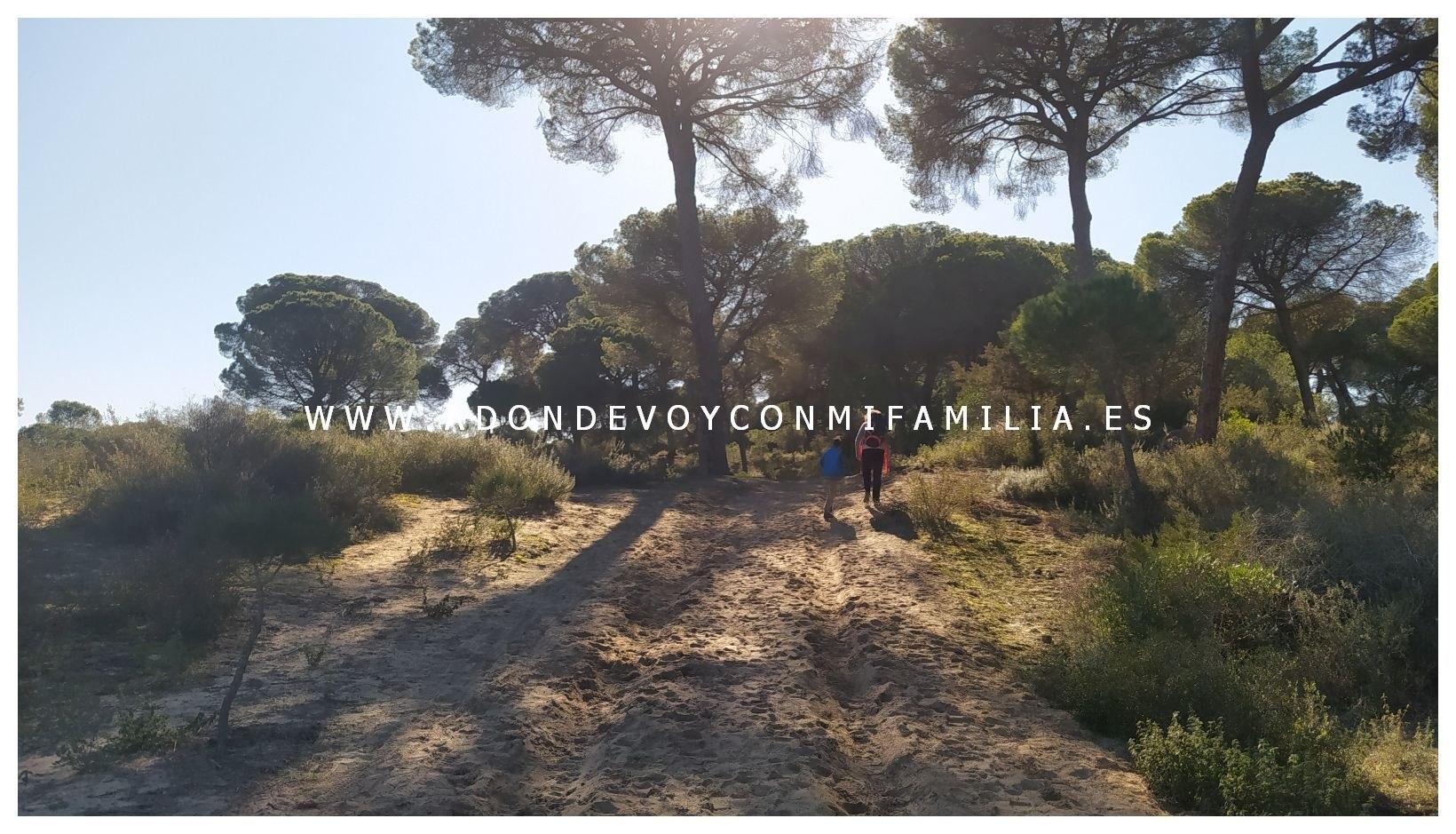 sendero-cerro-del-aguila-pinar-de-la-algaida-sanlucar-adondevoyconmifamilia-56