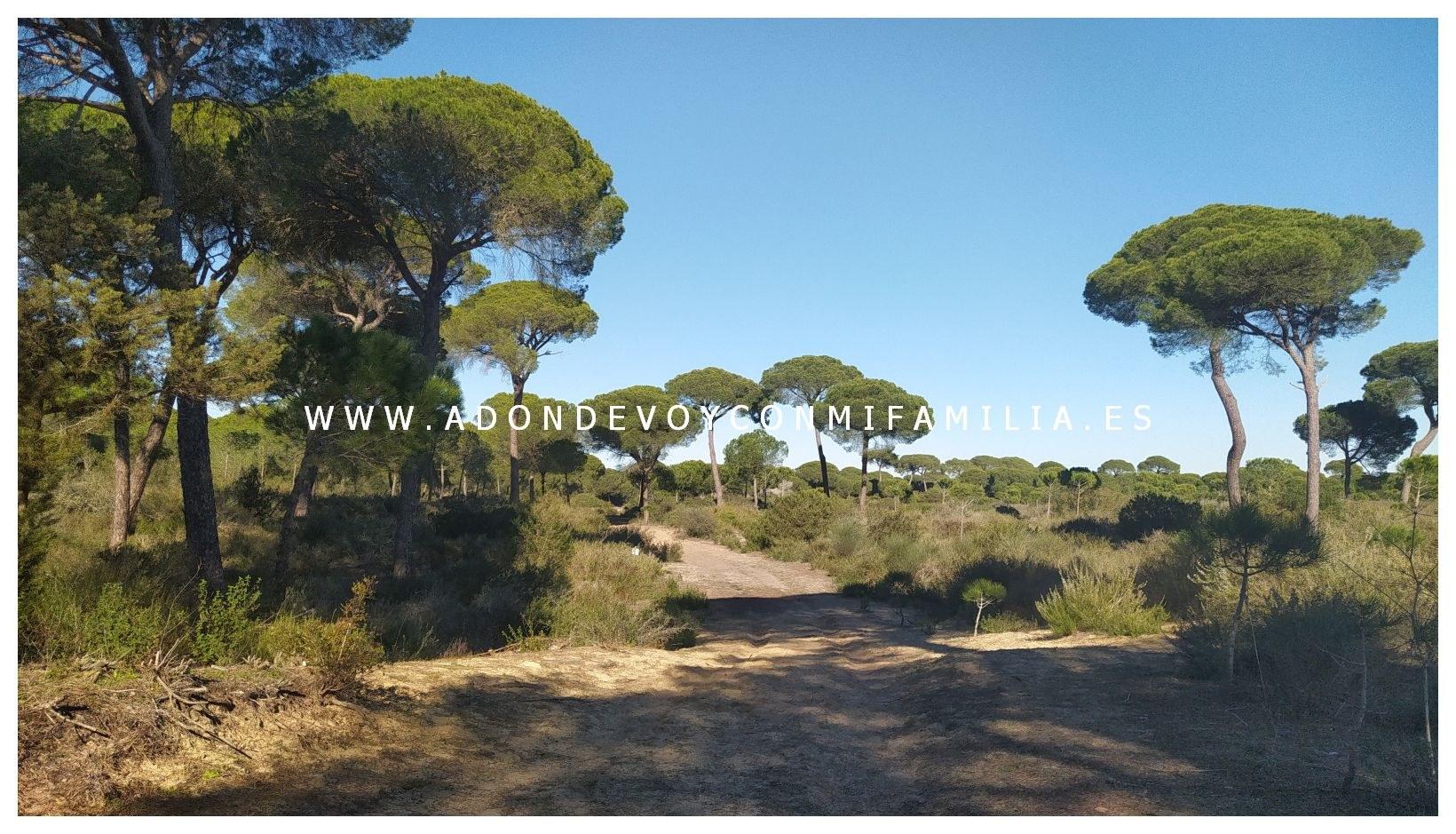 sendero-cerro-del-aguila-pinar-de-la-algaida-sanlucar-adondevoyconmifamilia-57