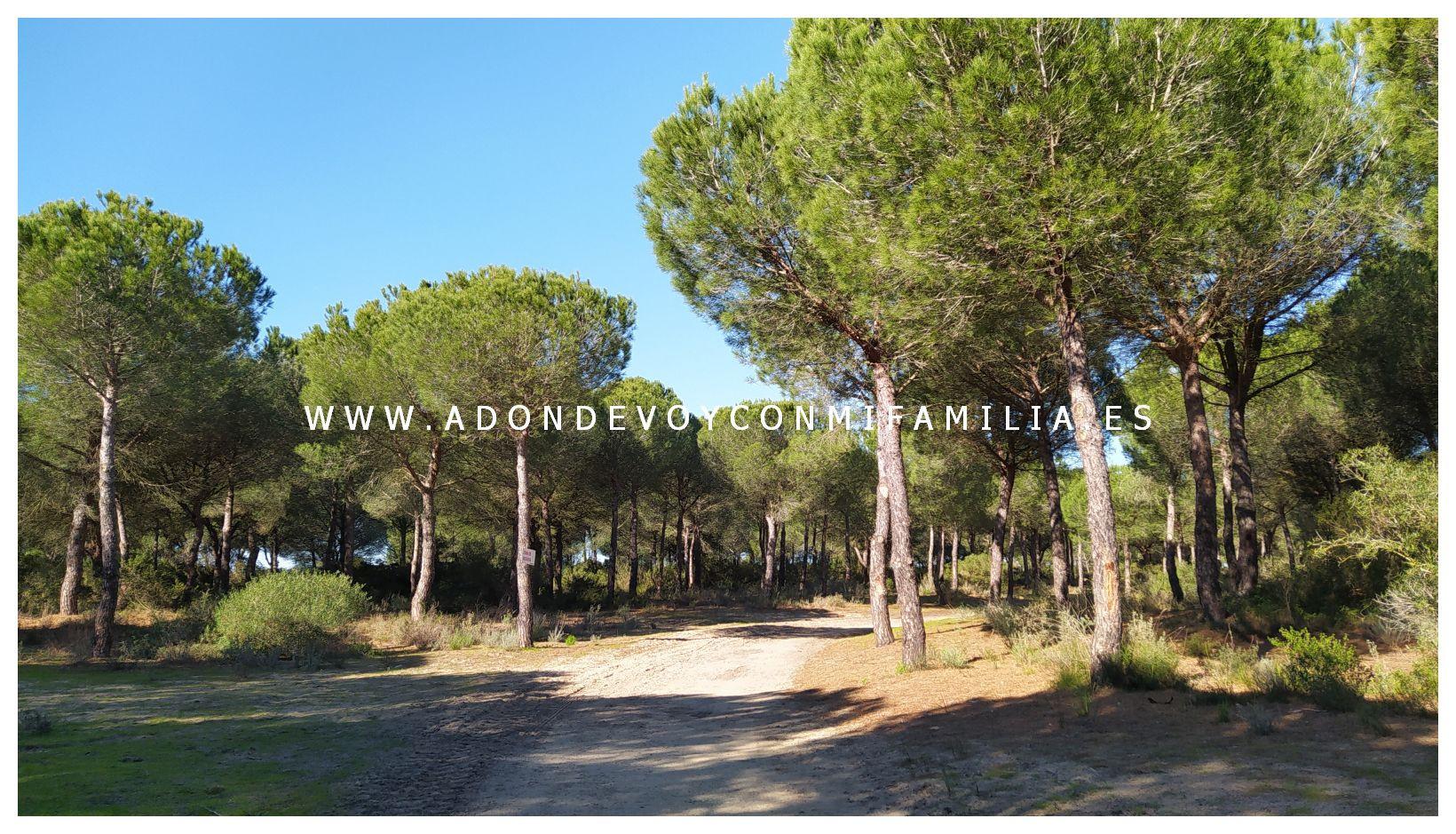 sendero-cerro-del-aguila-pinar-de-la-algaida-sanlucar-adondevoyconmifamilia-59
