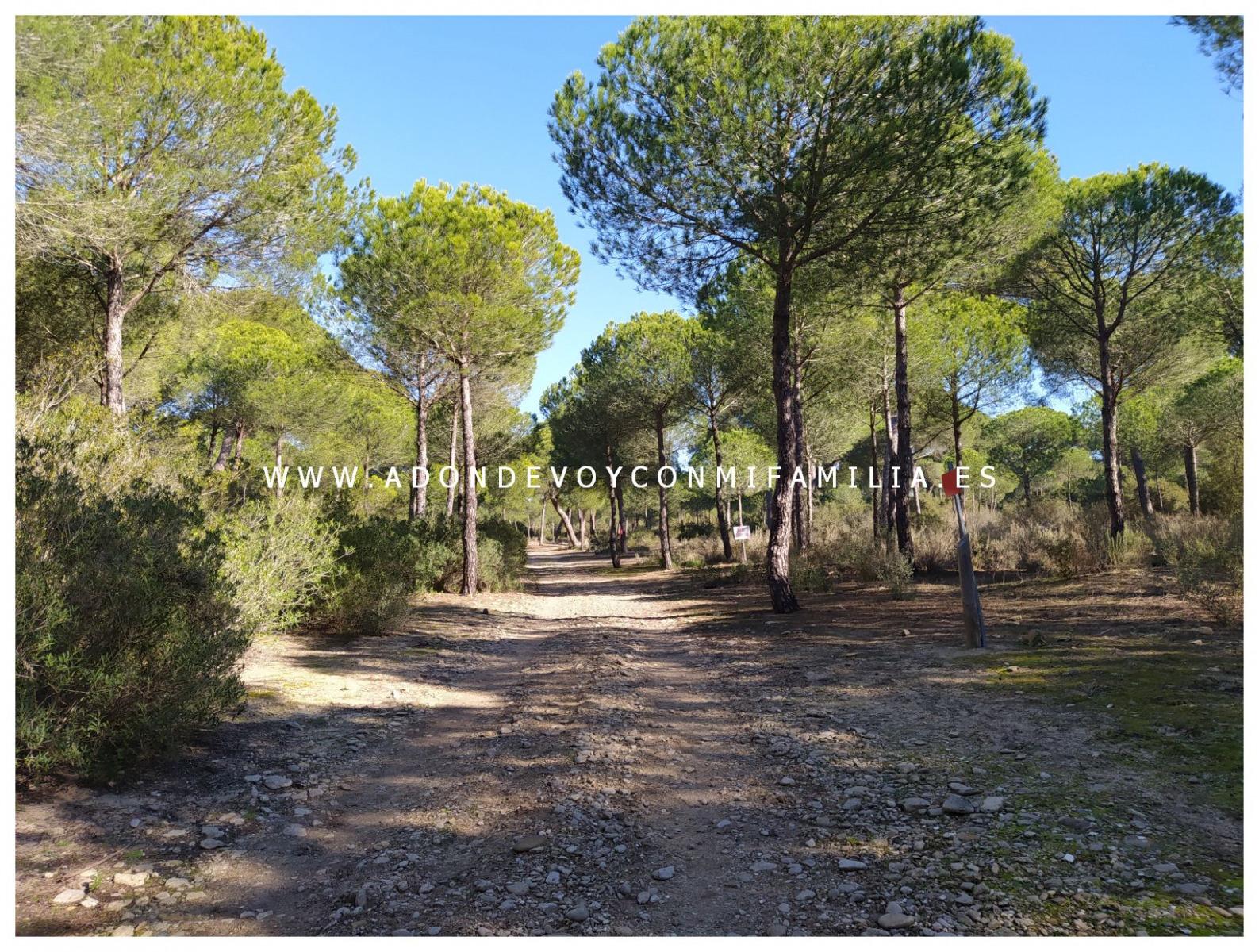 sendero-cerro-del-aguila-pinar-de-la-algaida-sanlucar-adondevoyconmifamilia-60