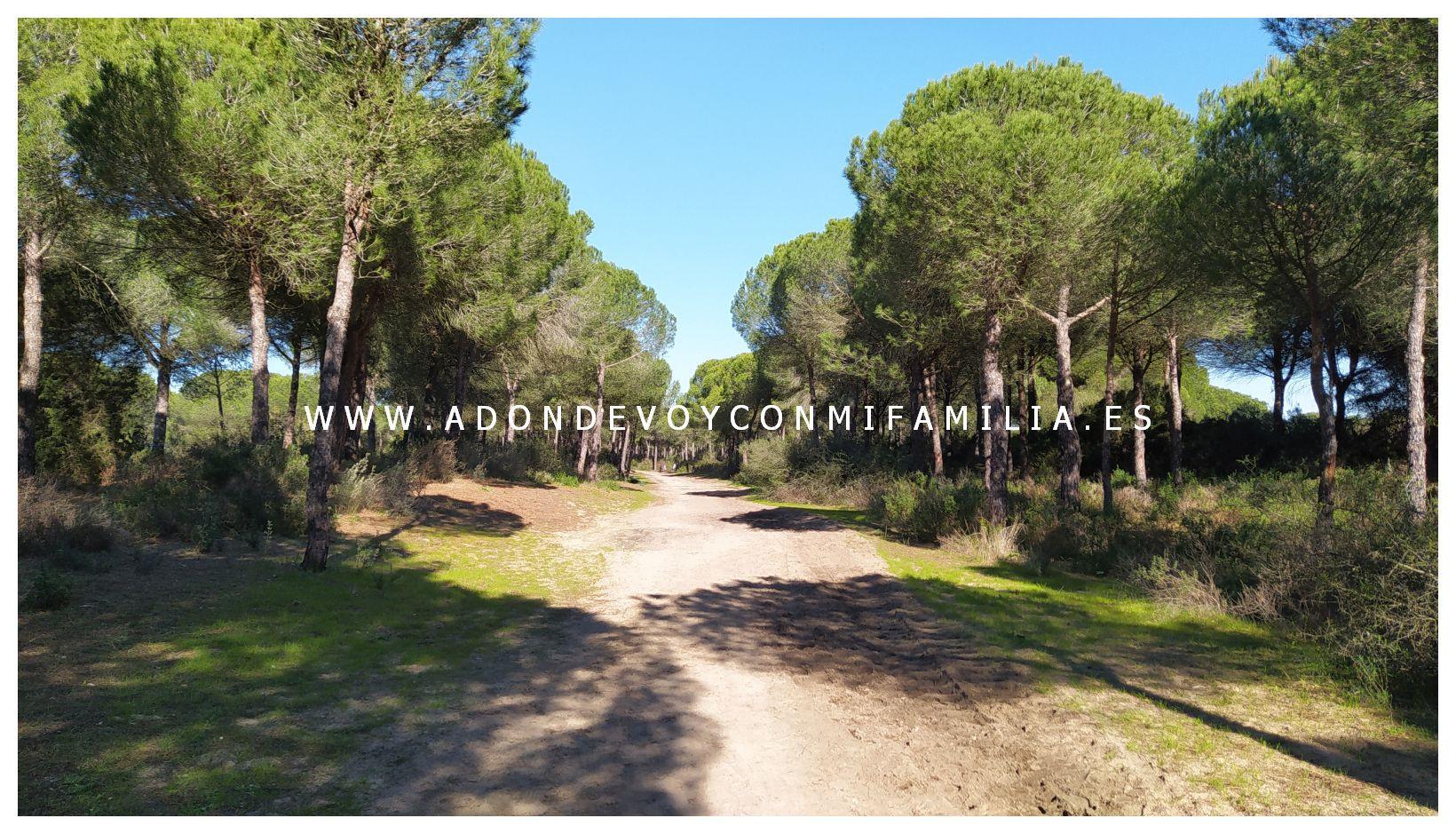sendero-cerro-del-aguila-pinar-de-la-algaida-sanlucar-adondevoyconmifamilia-61