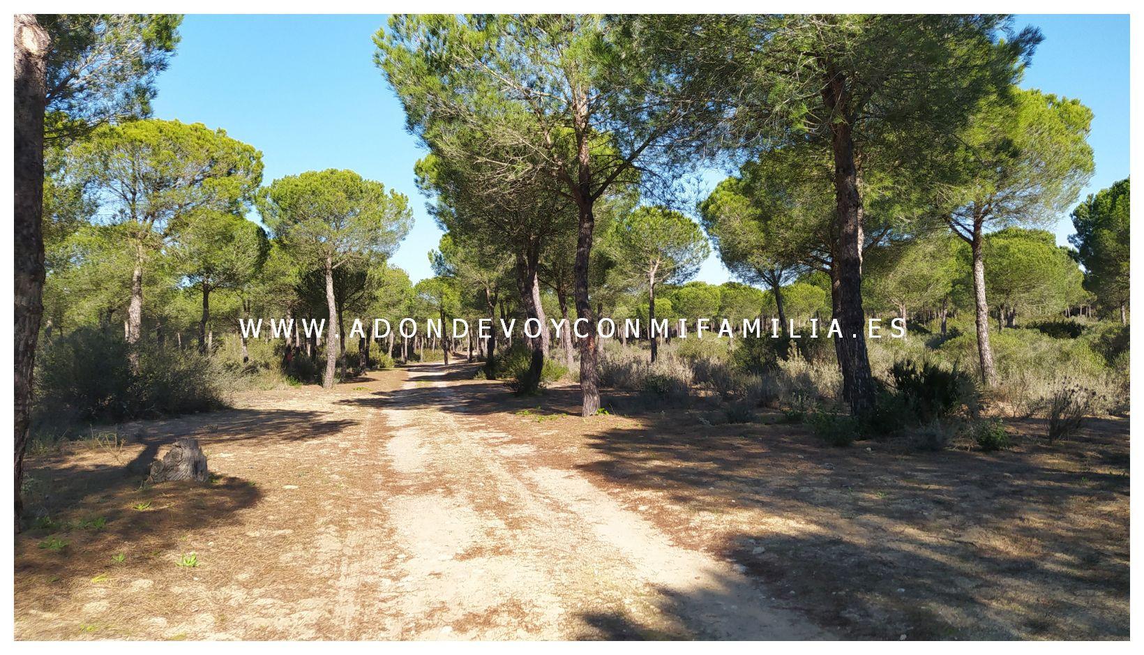 sendero-cerro-del-aguila-pinar-de-la-algaida-sanlucar-adondevoyconmifamilia-62