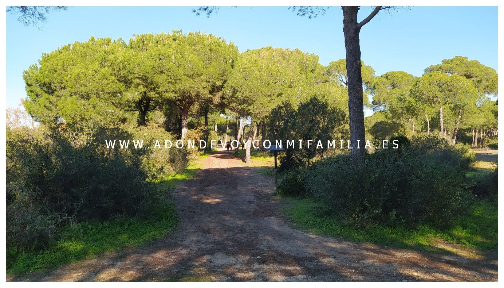 sendero-cerro-del-aguila-pinar-de-la-algaida-sanlucar-adondevoyconmifamilia-67