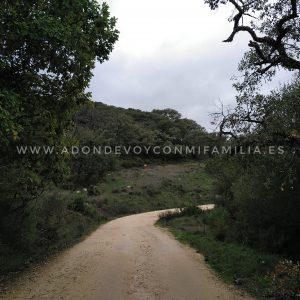 Repoblación Participativa Los Alcornocales