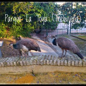 PARQUE LA TOYA (Trebujena)