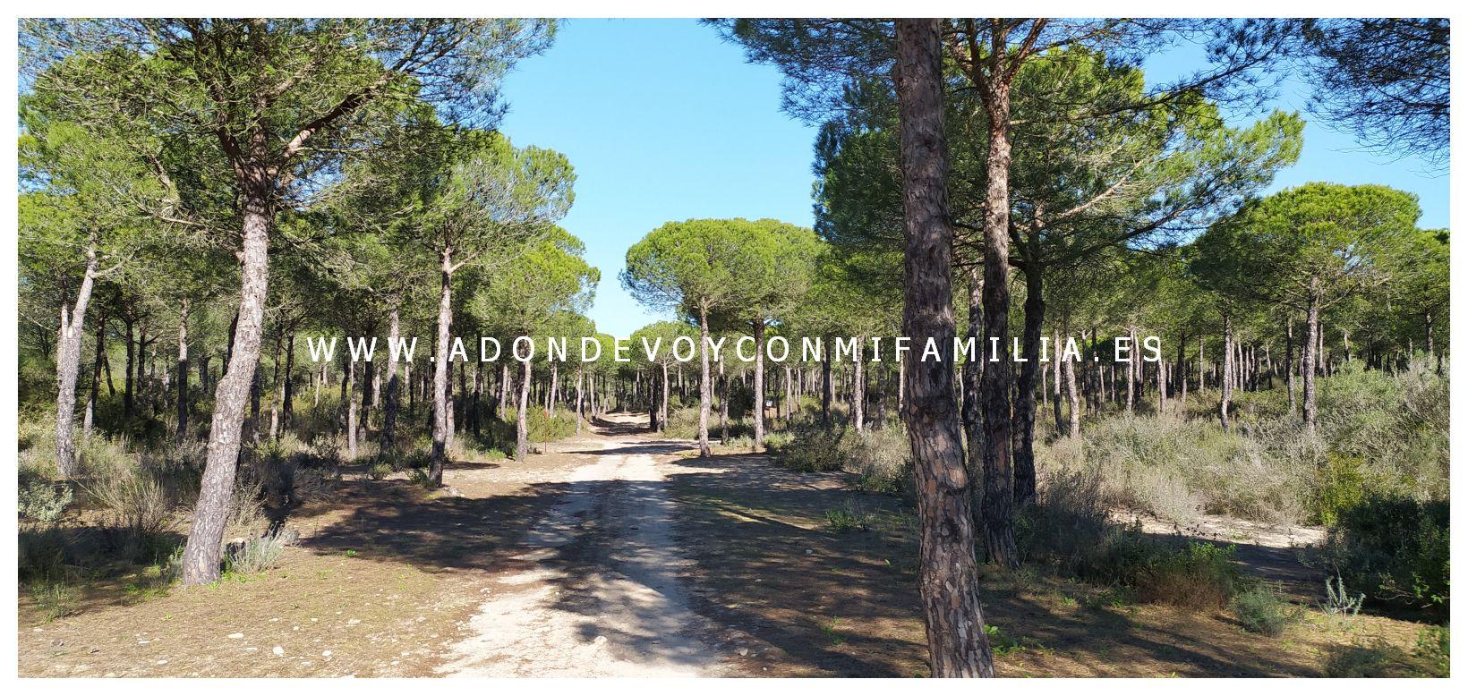 sendero cerro del aguila pinar de la algaida sanlucar adondevoyconmifamilia 13