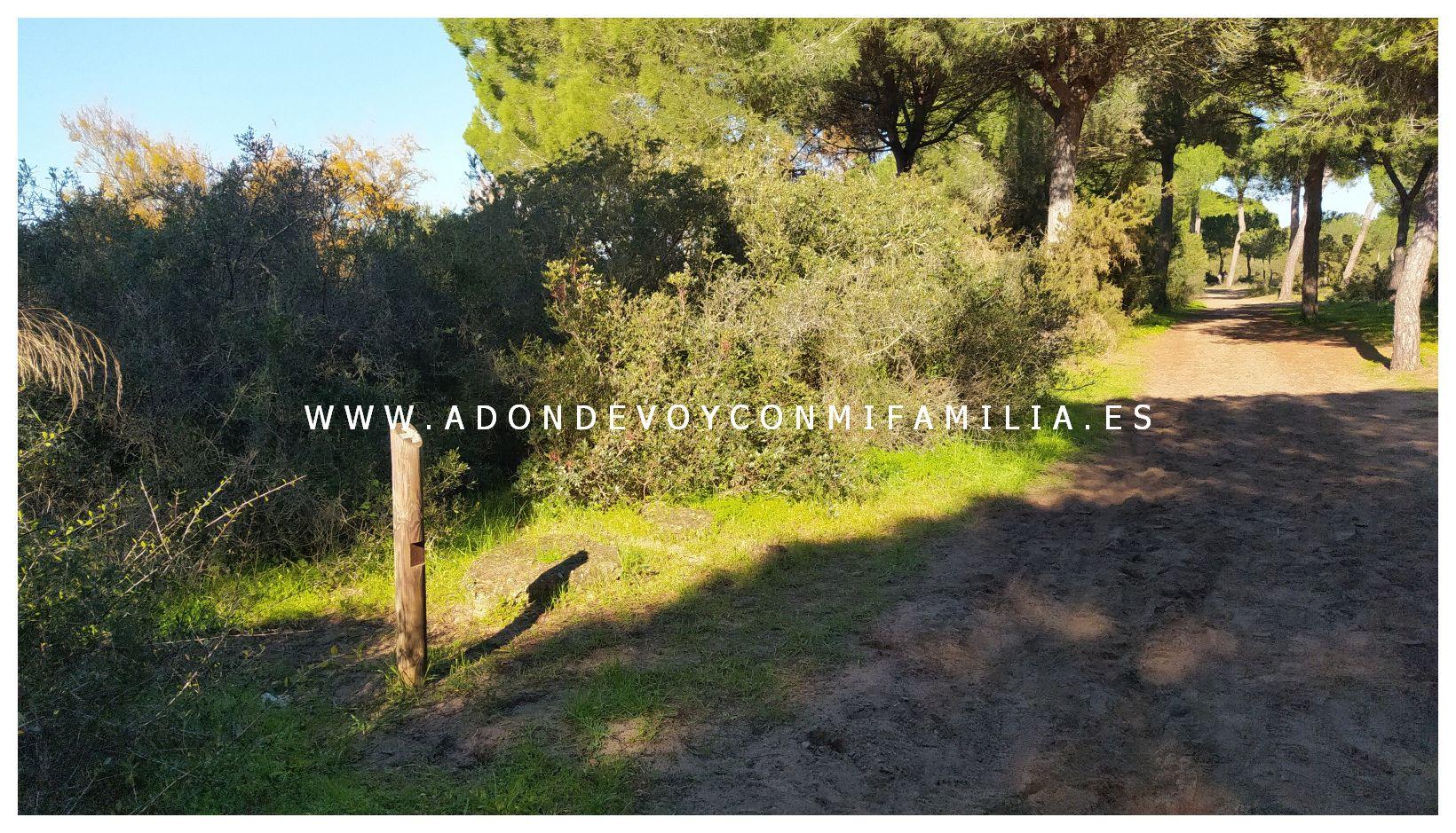 sendero cerro del aguila pinar de la algaida sanlucar adondevoyconmifamilia 65
