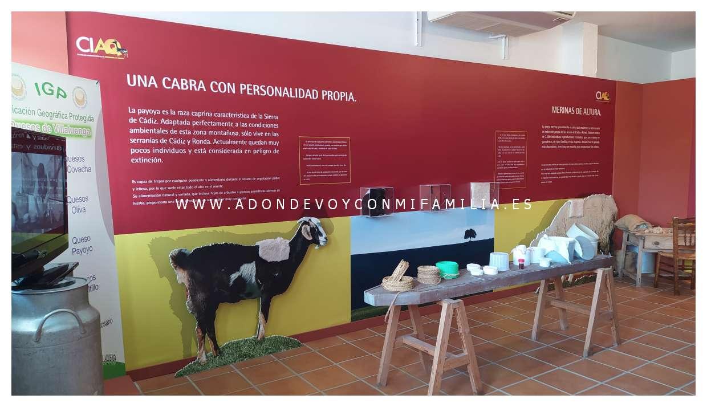 museo del queso villaluenga adondevoyconmifamilia 03