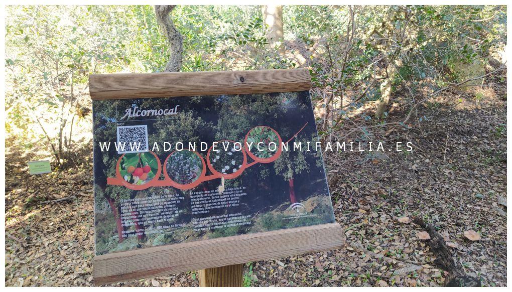 jardín botánico el aljibe alcala de los gazules adondevoyconmifamilia 04